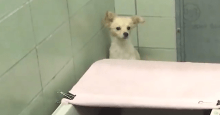Une chienne est terrorisée au refuge : une bénévole amène quelque chose qui va tout changer en 1 seconde !