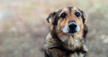 Furieux qu'un chien se soit accouplé avec sa chienne, il se précipite chez le maître et commet l'impensable