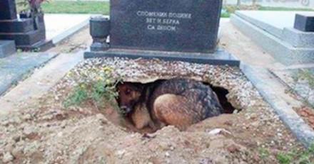 Allongée sur la tombe de sa maîtresse, cette chienne cachait en réalité un grand secret