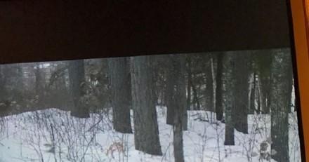 Une ombre dans la neige : ils se mettent à courir quand ils comprennent ce qui se passe