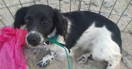 Ils trouvent une chienne abandonnée dans un caniveau : une fois au refuge sa réaction brise le coeur