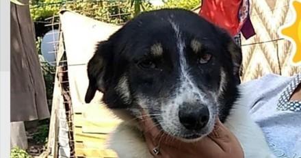 Une famille adopte une chienne et décide de la mettre sur un site de petites annonces : son destin est tragique