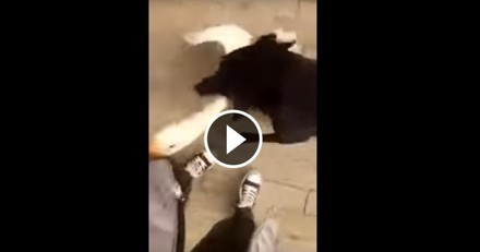 Trop mignon : un chien est prêt à tout pour protéger son maître d'une oie ! (Vidéo du jour)