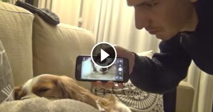 Son chien ronfle, il lui fait remarquer de la plus drôle des manières ! (Vidéo du jour)