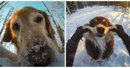 Ces chiens  vivent des aventures incroyables avec leur papa (Vidéo du jour)