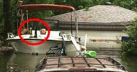 Il aperçoit deux chiens dans un bateau, s'approche et réalise quelque chose de terrible
