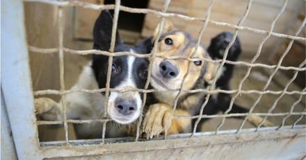 Le plus grand abattoir de chiens de la Corée du Sud ferme ses portes !
