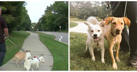 Traîné dans les bois par ses chiens, il comprend ensuite la raison et a les larmes aux yeux (Vidéo)