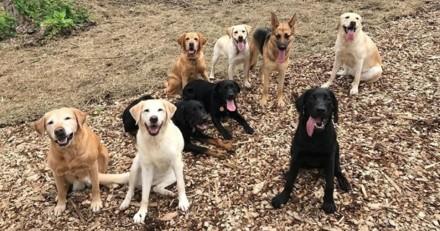 Impressionnant ! Regardez ces 174 chiens de service faire un exercice incendie (Vidéo)