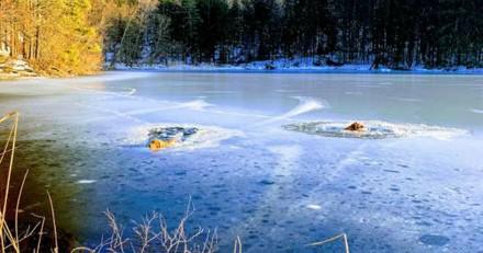 Il entend des hurlements près d'un lac, se met à courir et n'en revient pas de ce que fait sa chienne