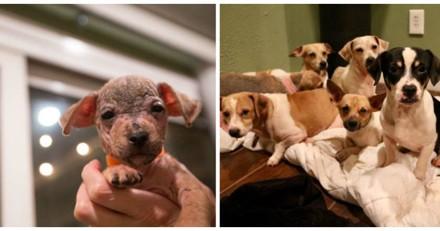 Ils trouvent 22 chiens enfermés dans une voiture, en leur venant en aide ils voient que c'est encore bien pire