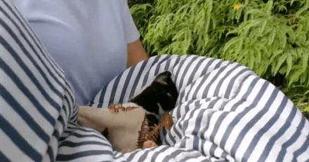 Un singe kidnappe un chiot et s'enfuit avec son otage pendant 3 jours