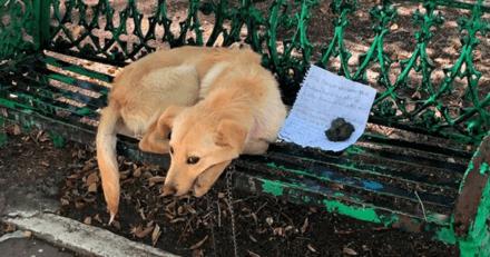Un chiot est abandonné sur un banc avec un mot : c'est un enfant qui a écrit ce texte déchirant