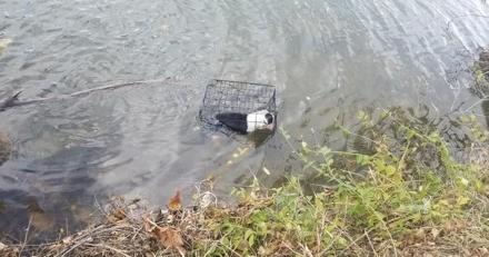 Il se balade près d'un lac, soudain ce qu'il découvre dans l'eau lui arrache un cri d'effroi