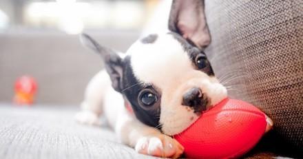 Ces entreprises proposent des congés payés en cas d'adoption d'un animal de compagnie et on adore l'idée !