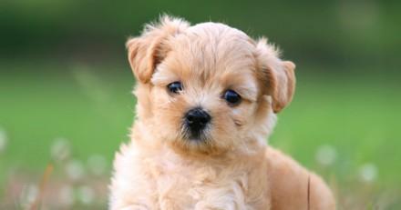 Top 10 des noms originaux de chiens femelles en N pour 2017