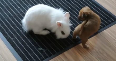 Ce chiot et ce lapin qui jouent vont vous faire totalement craquer (Vidéo du jour)