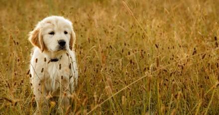 Top 10 des noms originaux de chiens mâles en N pour 2017