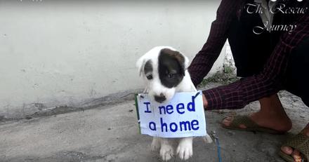 Elle croise la route d'un chien errant avec une pancarte autour du cou : son histoire est bouleversante (Vidéo)