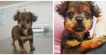 Ils demandent à faire euthanasier leur chiot, le vétérinaire fait une annonce à laquelle personne ne s'attendait