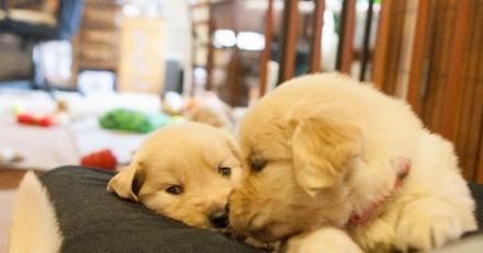 Surprise ! Sa chienne donne naissance à un chiot vert !