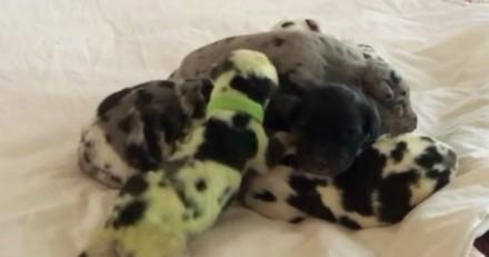 Sa chienne met au monde ses petits : en voyant le 8e chiot, elle fonce chercher ses lunettes