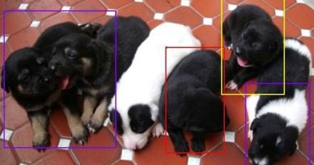 Elle tombe sur les photos d'un chien qui buzz et réalise quelque chose de très important