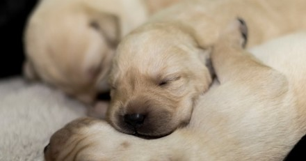 « Un chien extraterrestre » : l'agriculteur va voir les chiots qui viennent de naître et n'en croit pas ses yeux