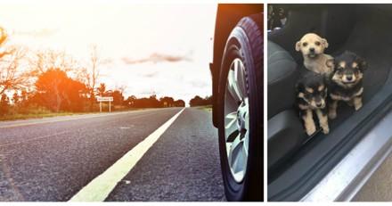 En voiture, il voit trois chiots et prend une décision très dangereuse
