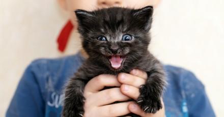 5 choses que vous ne devez jamais (mais alors jamais) faire à votre chat
