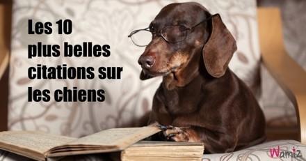 Journée Mondiale du Chien : les 10 plus belles citations sur les chiens !