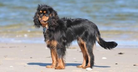 Les 5 dangers de la plage pour votre chien