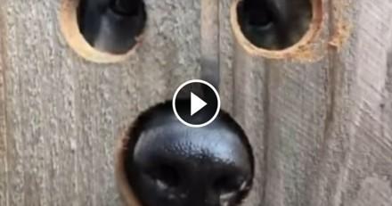 Elle trouve un stratagème pour permettre au chien des voisins de lui dire bonjour