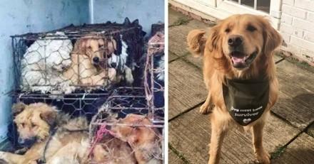 Clover était en train de mourir dans une ferme de viande de chien, mais un jour, tout a changé…