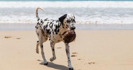 L'huile de coco est-elle bonne ou mauvaise pour mon chien ?