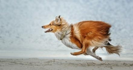 De combien de temps d'exercice mon chien a-t-il besoin chaque jour ?
