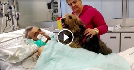 Dans le coma, un homme réagit lorsque sa chienne vient le voir à l'hôpital (Vidéo du jour)