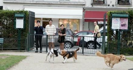 Et si on partageait enfin nos parcs et jardins municipaux avec nos chiens ?