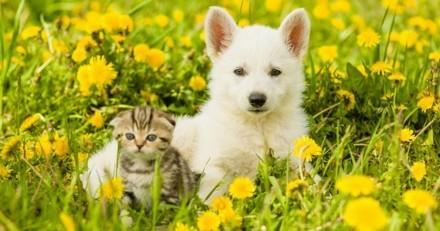 Faire garder son chien ou chat pendant les vacances : toutes les solutions !