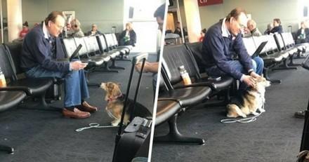 Et soudain, cette chienne est allée réconforter un inconnu dans un aéroport pour une raison bouleversante