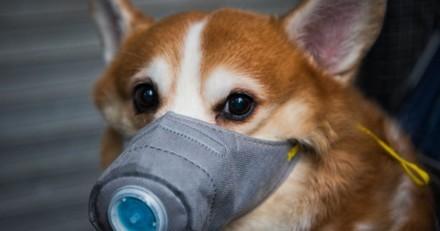 Coronavirus : les animaux domestiques des personnes malades seront placés en quarantaine !