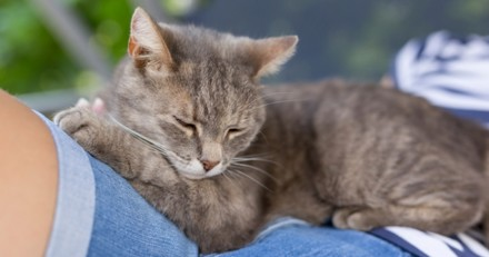 Les 3 endroits préférés des chats pour dormir
