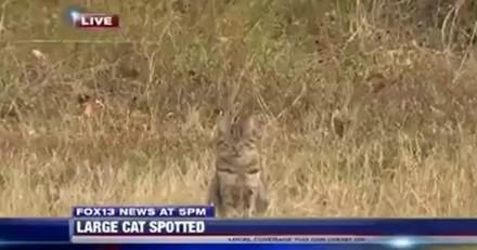 Ce chat signe le photobomb de l'année en prenant la place d'un cougar (Vidéo)
