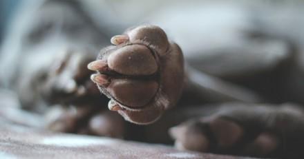 4 remèdes de grand-mère pour soigner les pattes de son chien