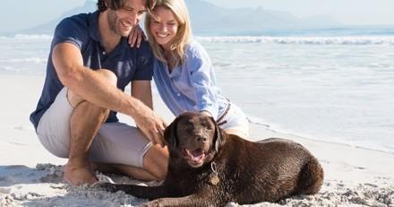 10 bonnes raisons d'adopter un Labrador
