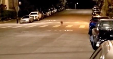 Il voit un couple dans la rue en train de promener un chien : une ombre surgit derrière et c'est la panique !