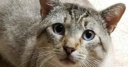 Condamné à l'euthanasie, ce chat a été sauvé et découvre l'amour pour la première fois