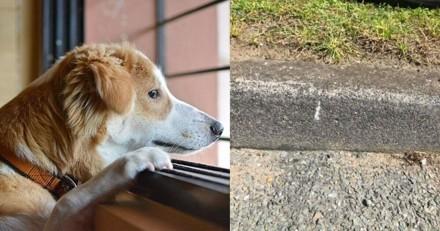 Marque à la craie devant chez vous ? Votre chien est peut-être en danger !