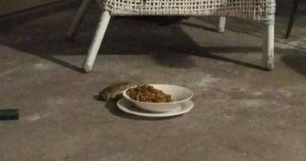 La nourriture de son chat disparait : un soir, elle décide de rester à côté de la gamelle et n'en revient pas