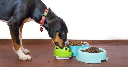 Croquettes pour chiens adultes à prix mini : 3 bons plans